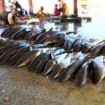 Protecting Predators of the Sea with SMU LKCSP Scholars