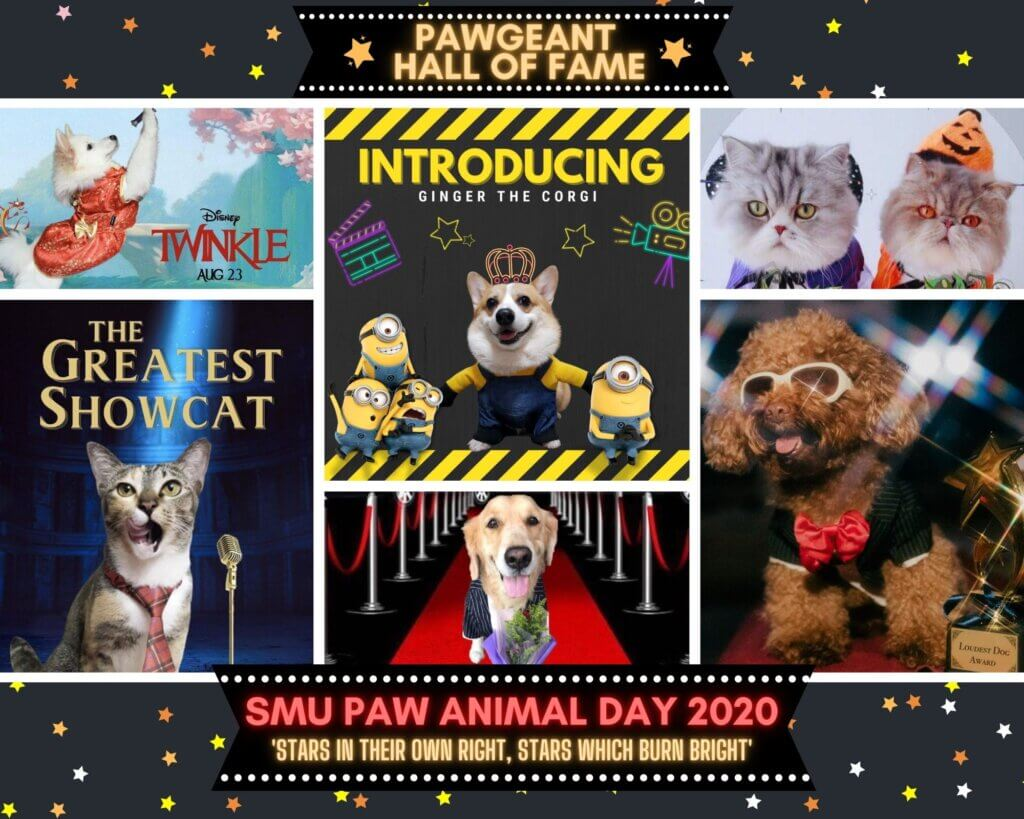 SPAD2020's super-cute PAWgeant contestants!t