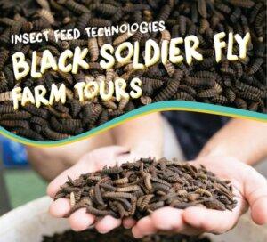 Black Soldier Farm Tours
